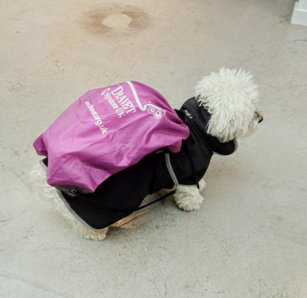 Expert canin